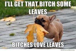 dogLovesLeaf